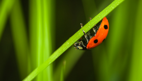 Which Insects Are Good for Your Garden and Which Do You Need to Get Rid of ASAP