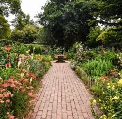 How to Design a Colorful Shade Garden