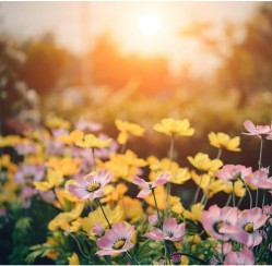 Setting up a Drip System for Your Garden? 4 Tips to Help You Out