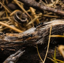 Tips for Keeping Unwanted Pests Out of Your Garden This Summer