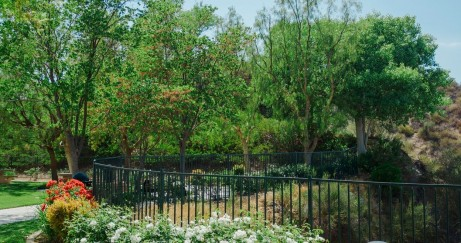 How to Keep Your Yard and Garden Looking Beautiful This Summer