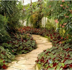 Pouring a Garden Path? 4 Concrete Designs to Get Yourself Thinking