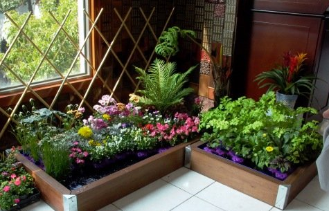 Indoor Garden: How to Grow Your Own Food This Winter ...